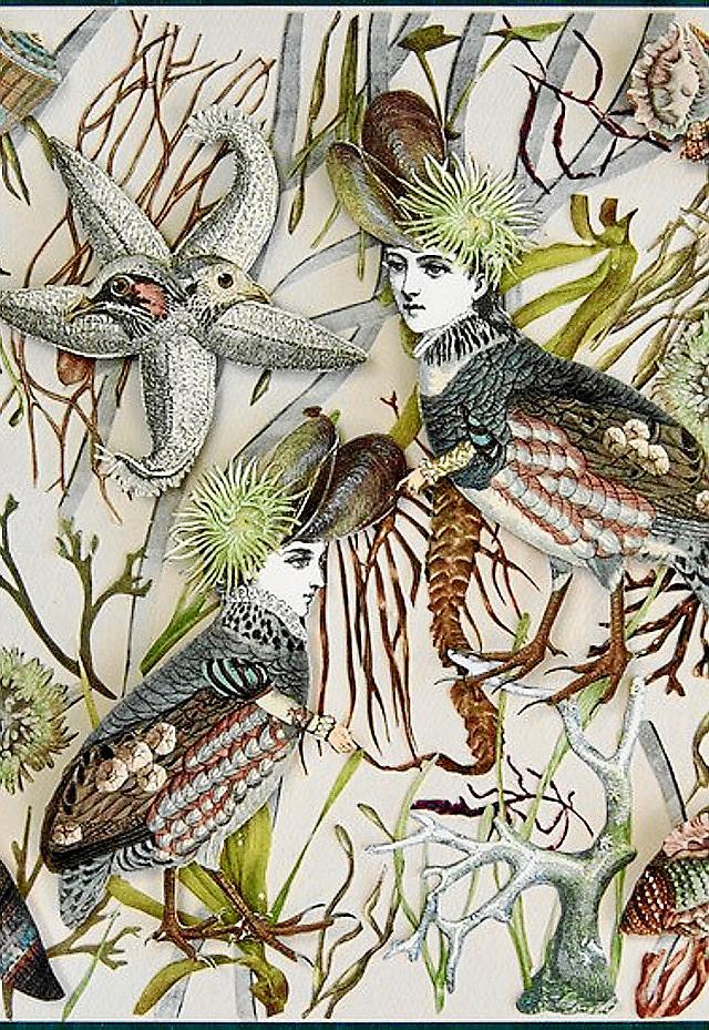 Molly birds Collage.