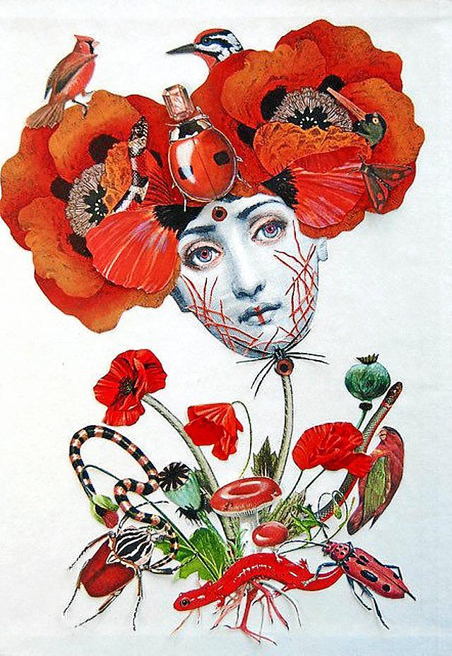 Poppy Collage.