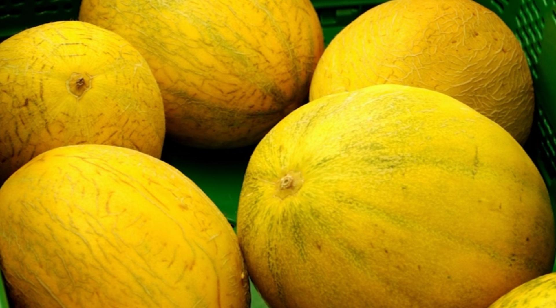MENORCA - Mercadona compra 59 toneladas de melón marina en Menorca.