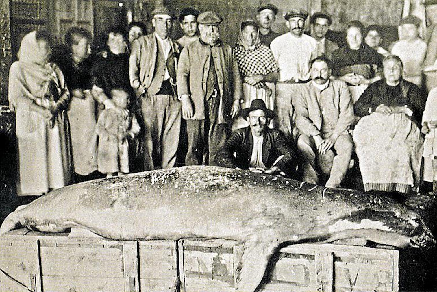 A group of people with a dead monk seal.
