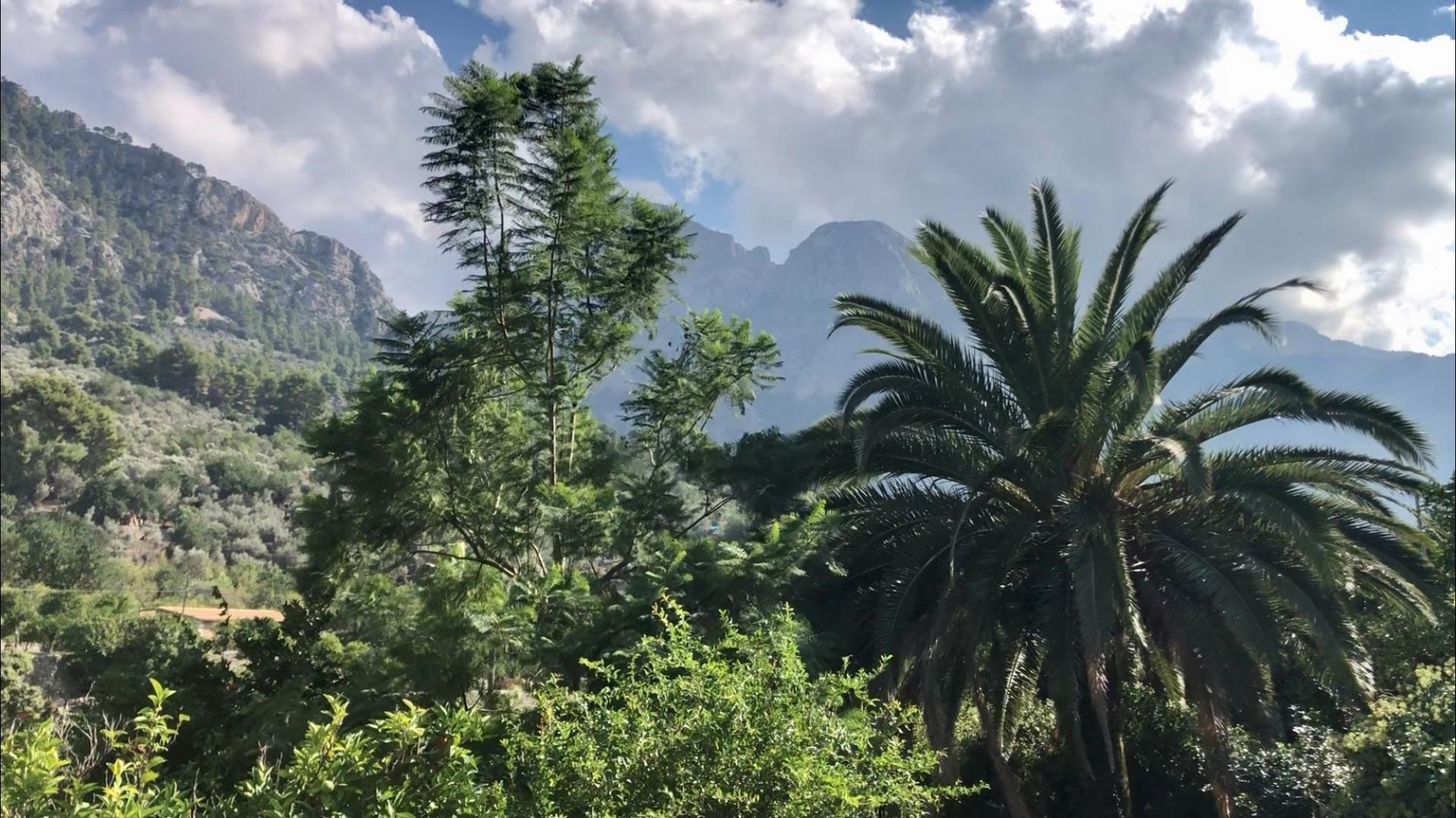 The 'Golden Bowl' of the Soller Valley occupies many words and pictures.