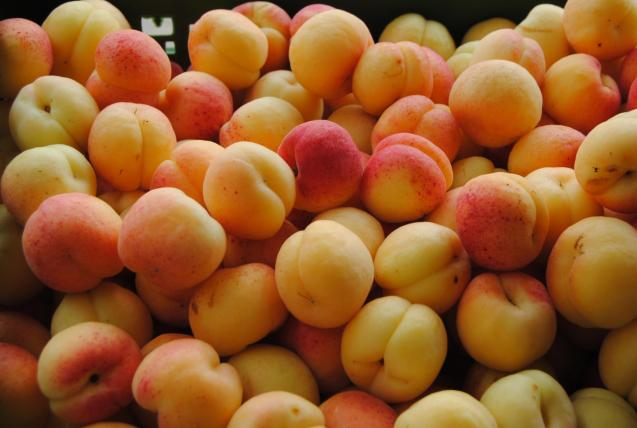 Apricots from Porreres.
