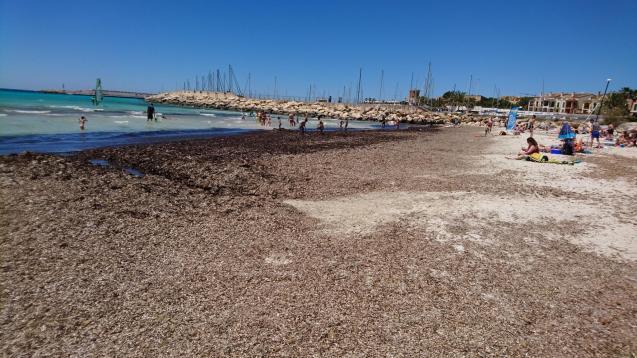 Sea weed in Sa Rapita