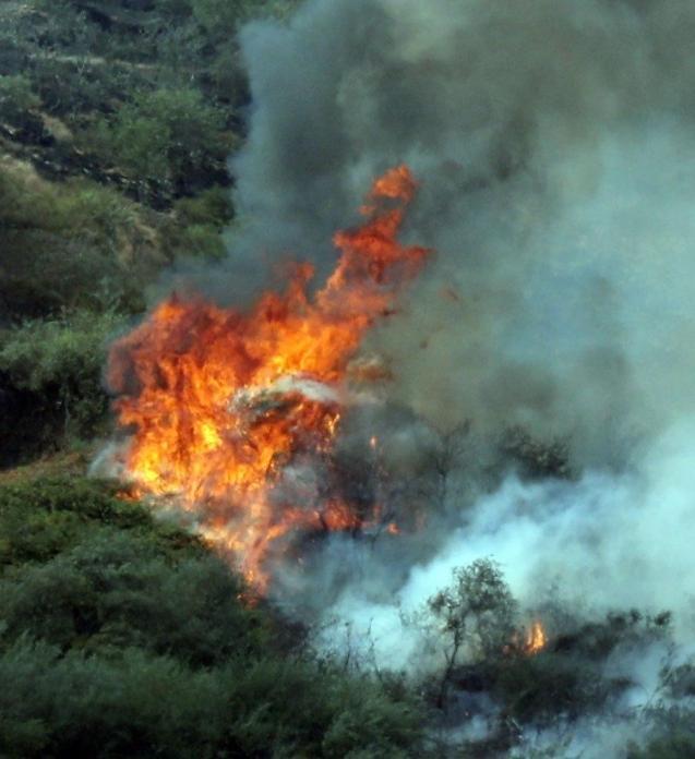Wildfire Gran Canaria