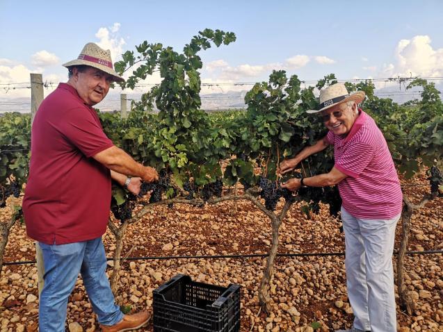 The rain has been beneficial to vineyards