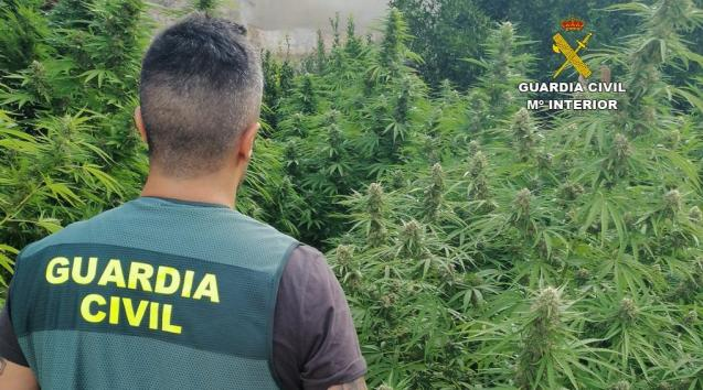 The Guardia Civil at one of the plantations