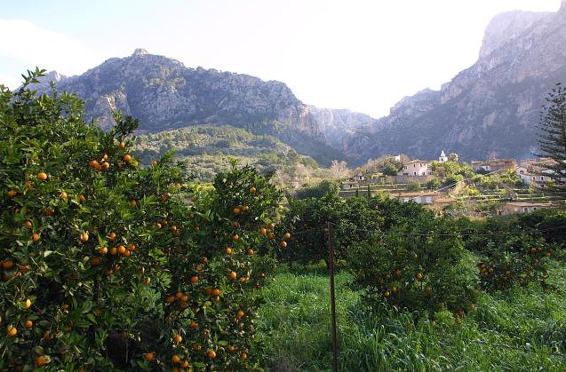 Views of the Soller Valley