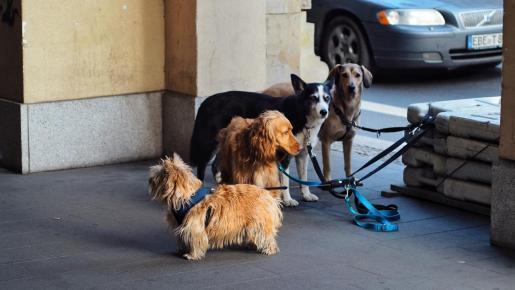 Governement want sero sacrifice of pets