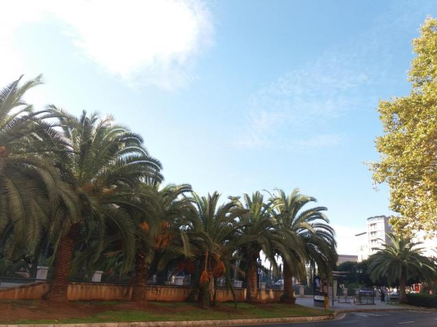 Palma this morning