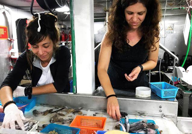 An explosion of marine life discovered in Majorcan waters