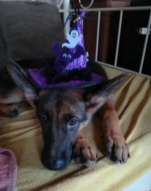 Ava in her Halloween hat