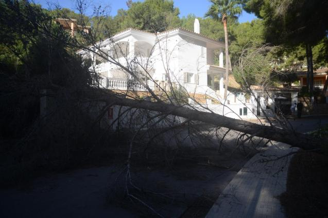 Palma sucesos temporal Andratx y Calvià. Fotos Michels (15).jpg