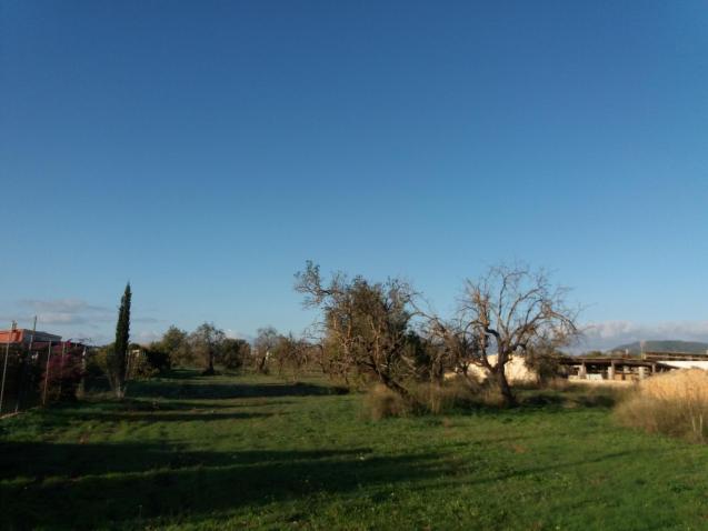 Sunny skies this morning