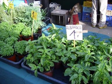 Basil grows well through the summer months. Archive photo.
