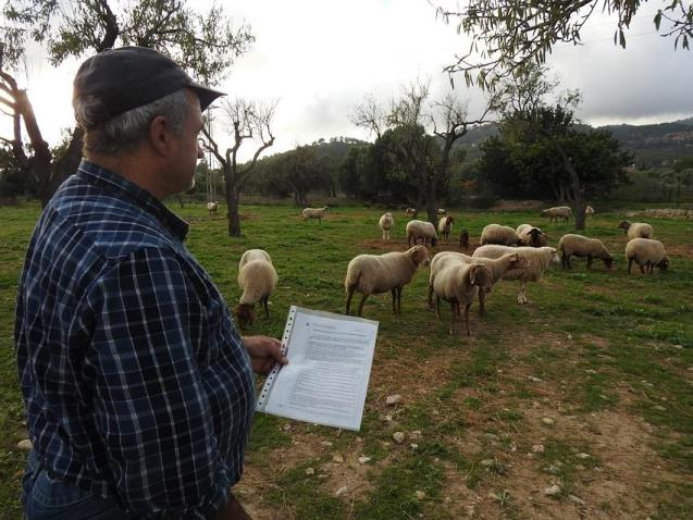 Farmers thought the animals were safe behind a 1.5m high fence