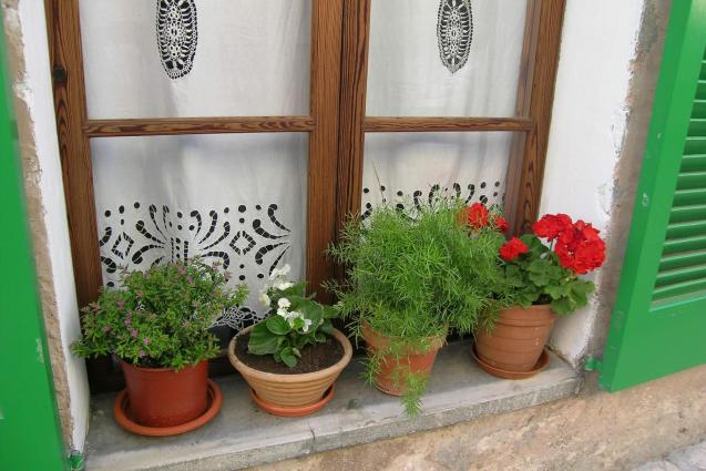 Growing in pots for window sills or terraces