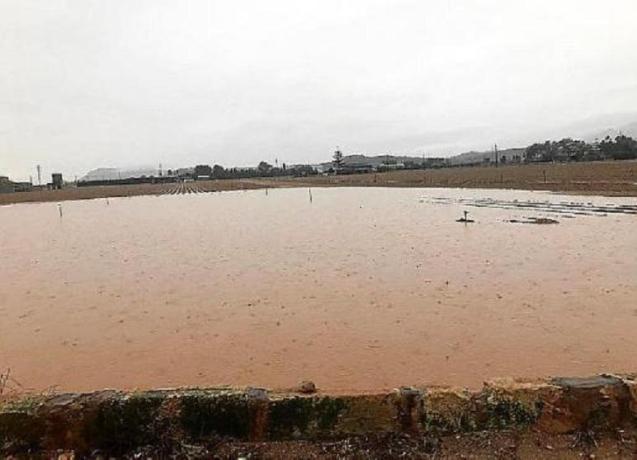 Flooded fields of Sa Pobla, Majorca