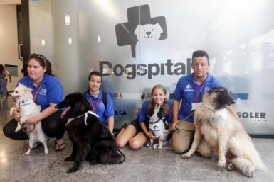 Dogspital at Can Misses hospital in Ibiza.