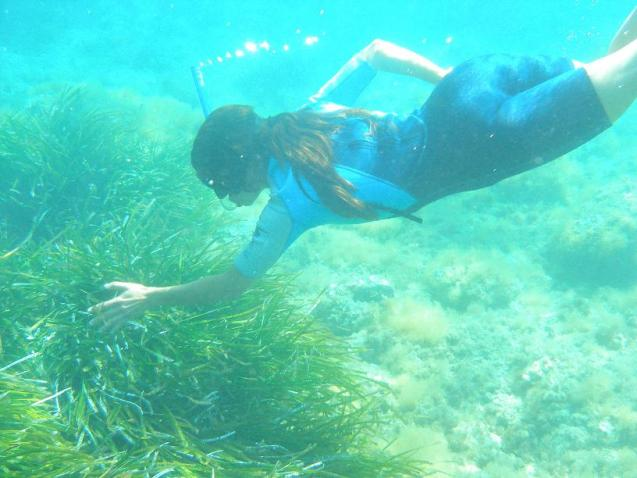 Posidonia meadows are vital for a healthy marine ecosystem