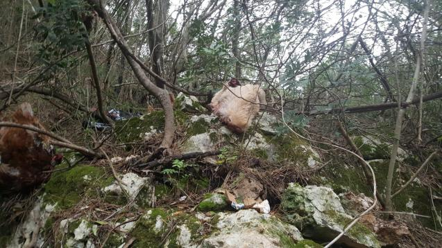 Animal remains found at finca in Santa Eugenia