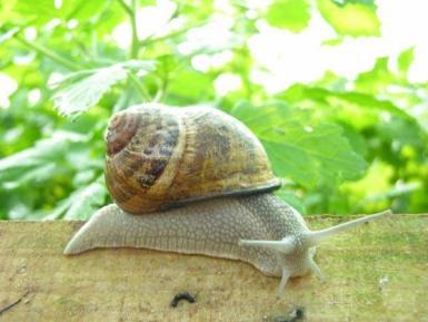 Slugs, snails and beetles can decimate a row of seedlings.