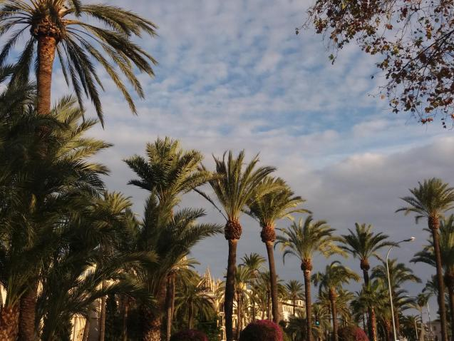 Cloudy with sunny intervals in Palma