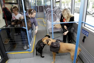 Pets on an EMT bus.