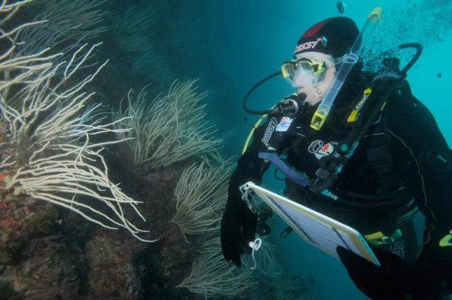 Diver collecting data on impacts of global warming on soft corals.