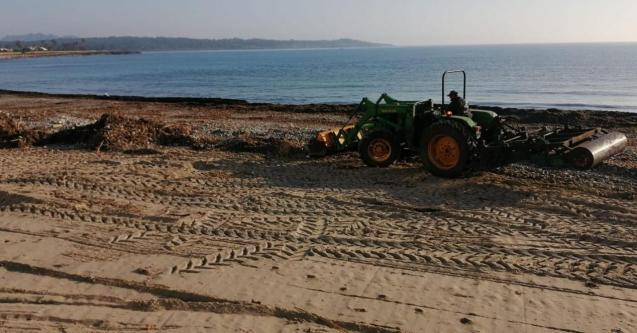 Beach concession company removes stones and debris from s'Illot beach.