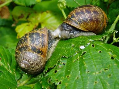 Some snails in the garden.