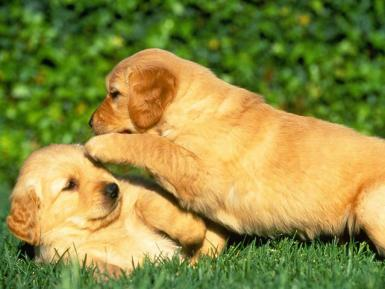 Two pups playing.