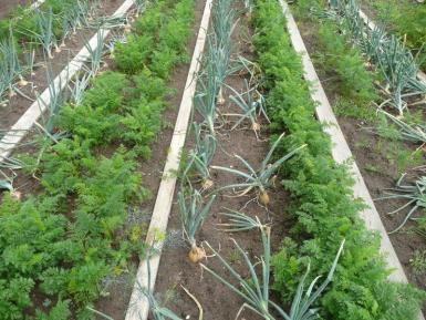 Now is the right time to get down to planting up early vegetables