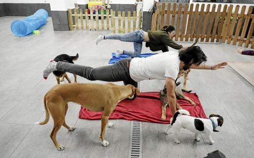 Yoga classes with dogs in Palma.
