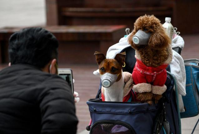 Dogs wearning masks