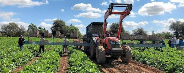 Farmers maintaining crops and feeding animals during State of Emergency.