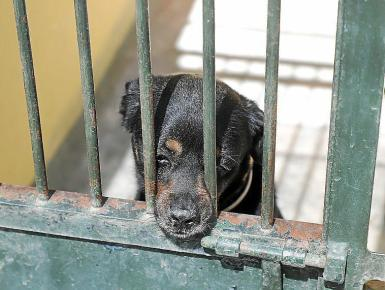 Fewer dogs have been abandoned since the state of emergency began.