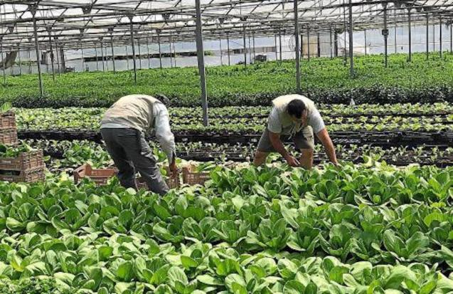 Fruit and vegetable production continues despite the drop in demand.