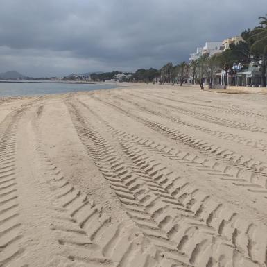Beach clean-up at Puerto Pollensa.