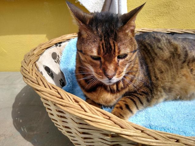 Khan on a very rare outing to his outside basket