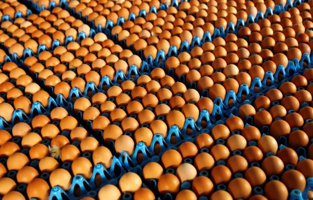 When we cook eggs by any method, the number one golden rule is: perfect freshness.