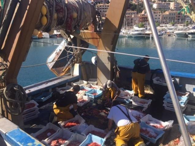 The multicultural fisherman from Soller head out to sea three times a week to find the Soller Prawns.