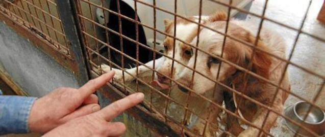 Increase number of pet owners want to return adopted dogs.