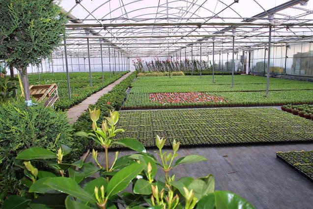 A garden centre