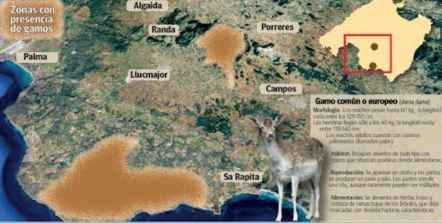 Complaints about deer in Majorca.