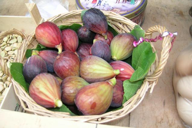Figs will soon be in the market across the island