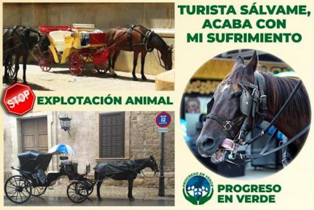 Progreso En Verde campaign to stop horse exploitation.