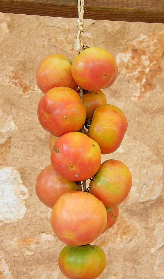 Mallorca Tomatoes
