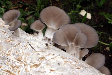 funghi farm