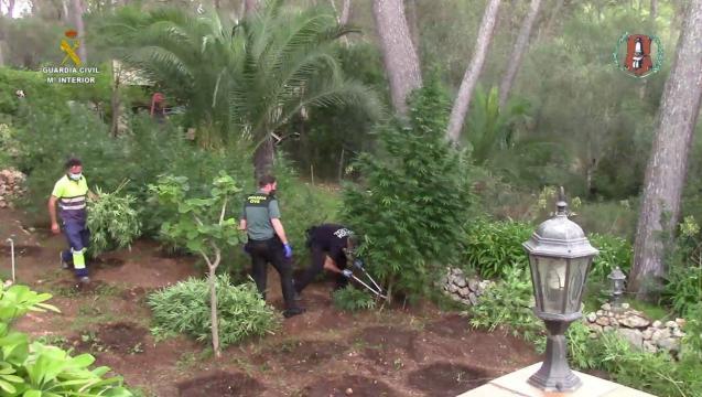 Mallorca marijuana plantation