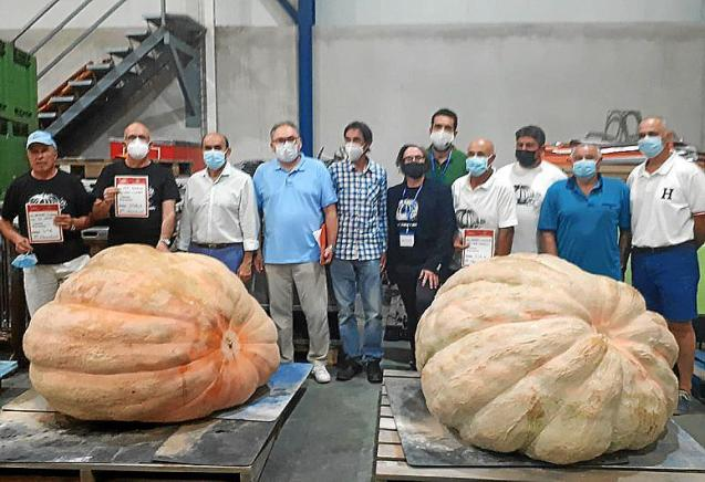 Giant pumpkins Mallorca